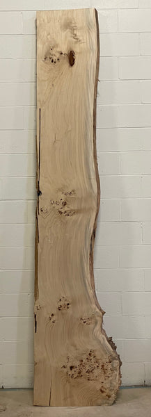 Large Slab Mappa Burl MB-002