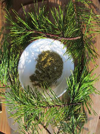 Pine Needle Tea - Powdered Virginia Pine, Pinus virginiana