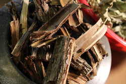 Black Walnut Bark - Wild Harvested Dried Fresh Bark