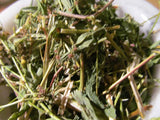 St. Johns Wort - Wild Harvest from the foothills of the Appalachian Mountains