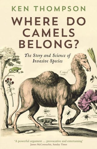 Where Do Camels Belong?, Ken Thompson