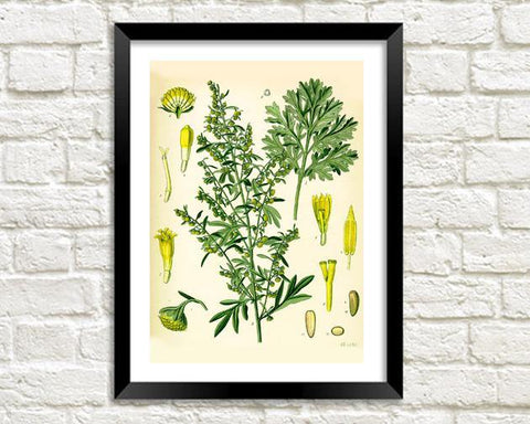 ABSINTHE ART PRINT: Vintage Botanical Plant Illustration - The Print Arcade