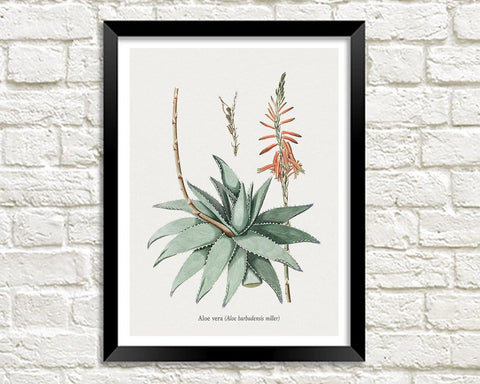 ALOE VERA ART PRINT: Vintage Botanical Plant Illustration