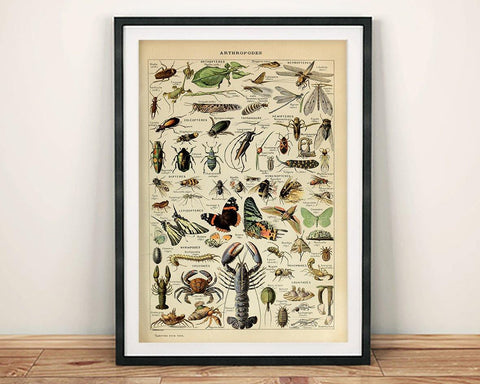 VINTAGE ARTHROPODS POSTER: French Insects Art Print