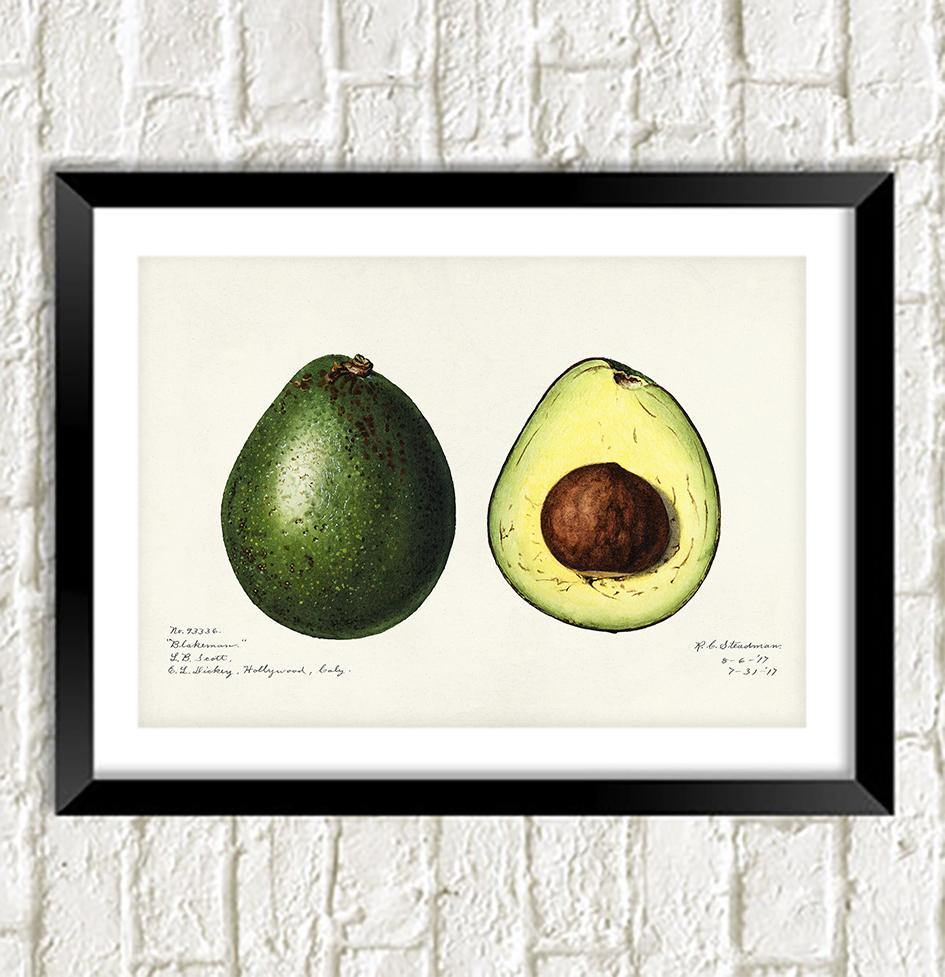 AVOCADO PRINT: Vintage Art Illustration