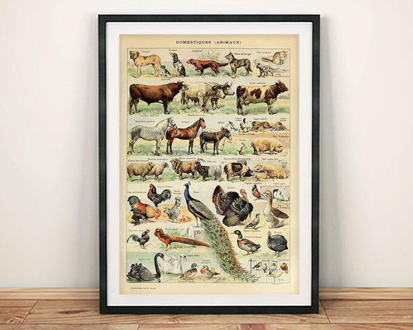 VINTAGE ANIMALS POSTER: French Farm Creatures Art Print