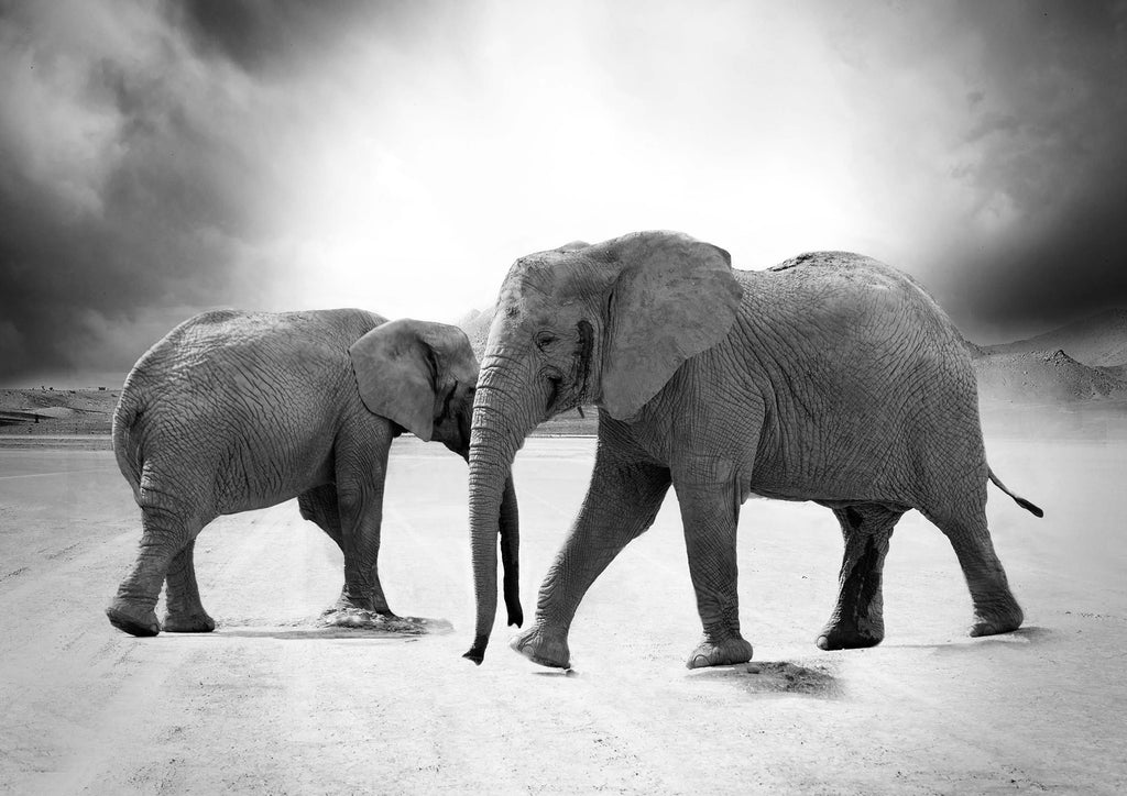 ELEPHANTS: Black and White Photography Print - The Print Arcade