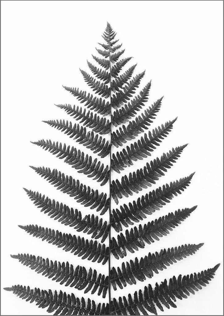 FERN PRINT: Black and White Leaf Art - The Print Arcade