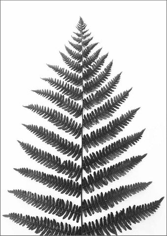 FERN PRINT: Black and White Leaf Art