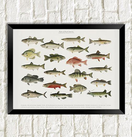 FISH POSTER: Fishes of North America Art Print - The Print Arcade