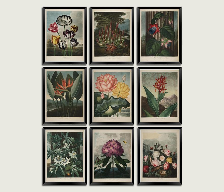 SET OF FLOWER PRINTS: Robert Thornton Temple of Flora Art