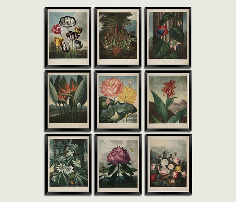 SET OF FLOWER PRINTS: Robert Thornton Temple of Flora Art - The Print Arcade