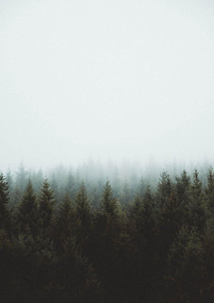 MISTY FOREST PRINT: Tranquility Photo Art - The Print Arcade