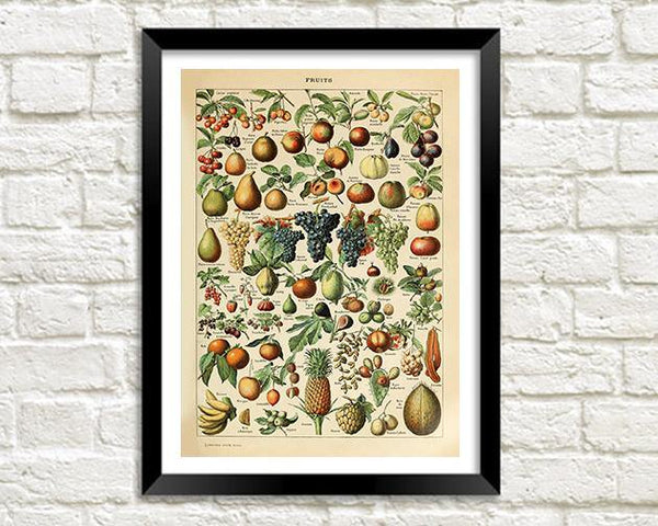 FRUITS ART PRINT: Vintage Fruit Illustration - The Print Arcade