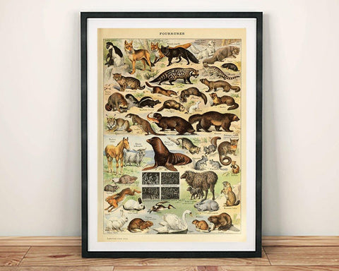 FURRY ANIMALS POSTER: French Art Print by Millot