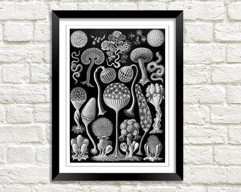 HAECKEL MYCETOZOA PRINT: Vintage Artforms of Nature - The Print Arcade