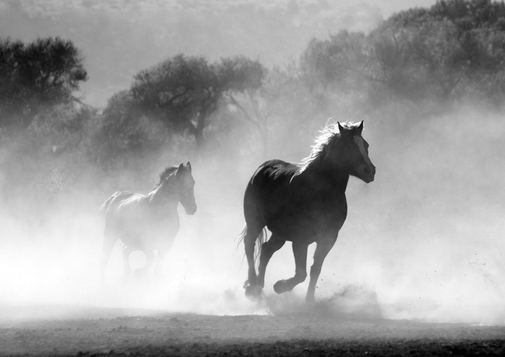 HORSES: Black and White Photography Print - The Print Arcade