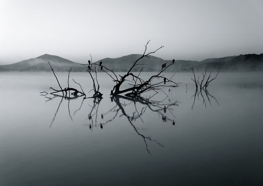 SILENT LAKE: Black and White Photography Print