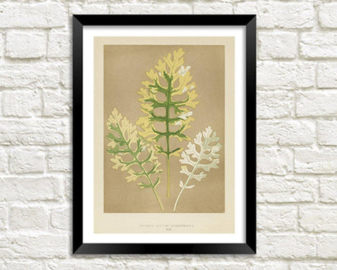 LEAVES PRINT: Vintage Botanical Art Illustration
