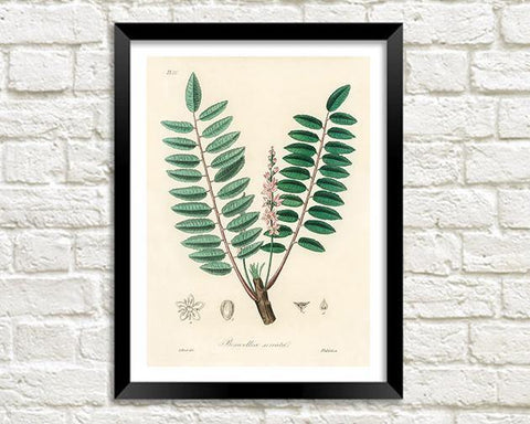 BOTANICAL LEAVES ART: Vintage Boswellia Serrata Print - The Print Arcade