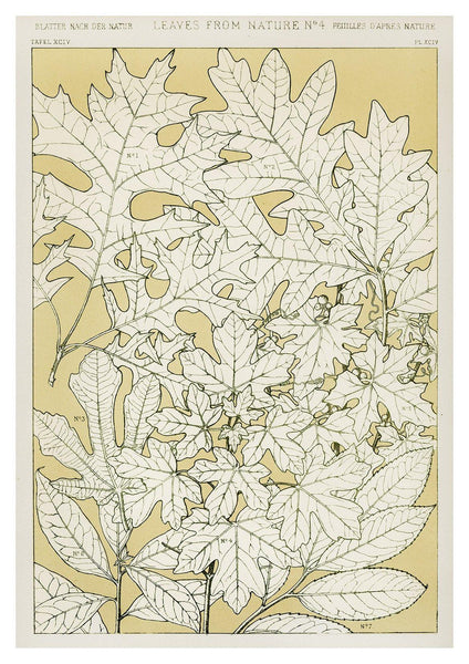 LEAVES FROM NATURE: Vintage Leaf Art Print - The Print Arcade
