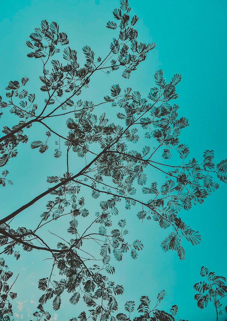 LEAVES SILHOUETTE PRINT: Blue Sky Photo Art - The Print Arcade