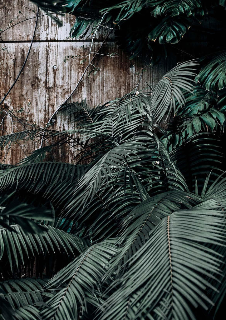TROPICAL LEAVES PRINT: Green Photo Art - The Print Arcade
