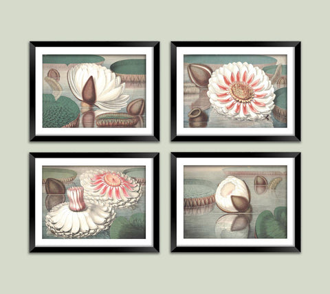 WATER LILY ART PRINTS: Vintage Flower Illustrations