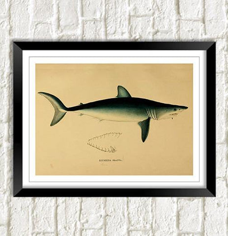 MAKO SHARK PRINT: Vintage Sea Life Art