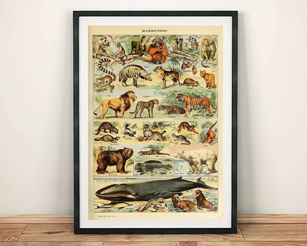 VINTAGE MAMMALS POSTER: French Art Print With Lion, Whale