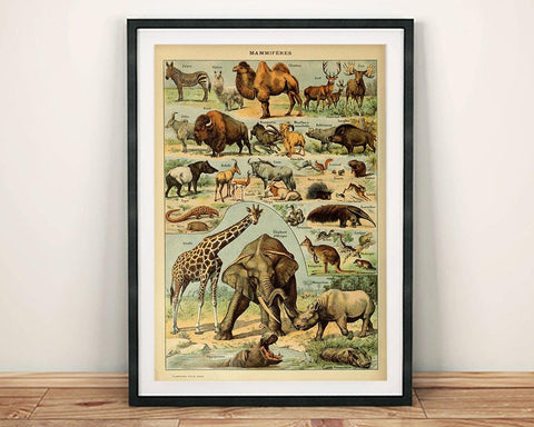 VINTAGE MAMMALS POSTER: French Art Print With Elephant, Giraffe