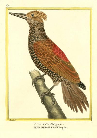 WOODPECKER BIRD PRINT: Vintage Brown Bird Art - The Print Arcade