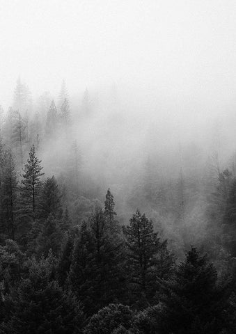 MISTY FIR TREES PRINT: Black and White Wall Art