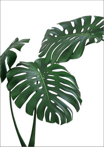 MONSTERA PRINT: Green Tropical Plant Photo Poster - The Print Arcade