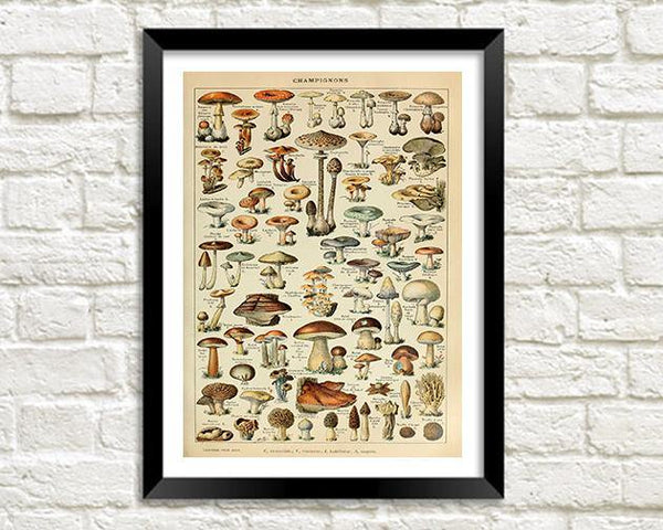 MUSHROOMS PRINT: Vintage Fungi Art Illustration - The Print Arcade