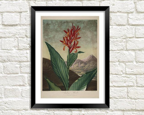 INDIAN REED PRINT: Robert Thornton Ornage Flower Art - The Print Arcade