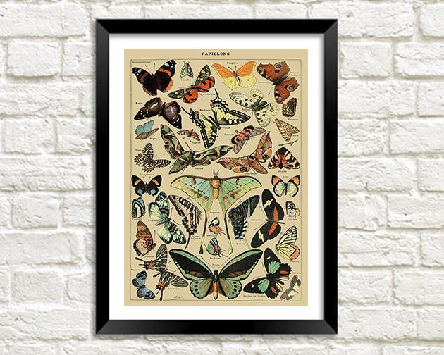 PAPILLONS PRINT: Vintage French Butterflies Art Poster