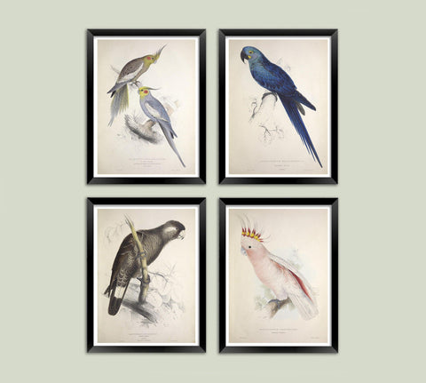 PARROT AND PARAKEET PRINTS: Vintage Bird Art Illustrations