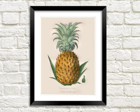 PINEAPPLE ART PRINT: Vintage Fruit Illustration - The Print Arcade