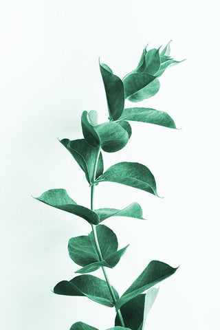 PLANT STALK PRINT: Green Stem Photo Art