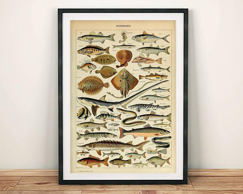 VINTAGE FISH POSTER: French Poissons Art Print