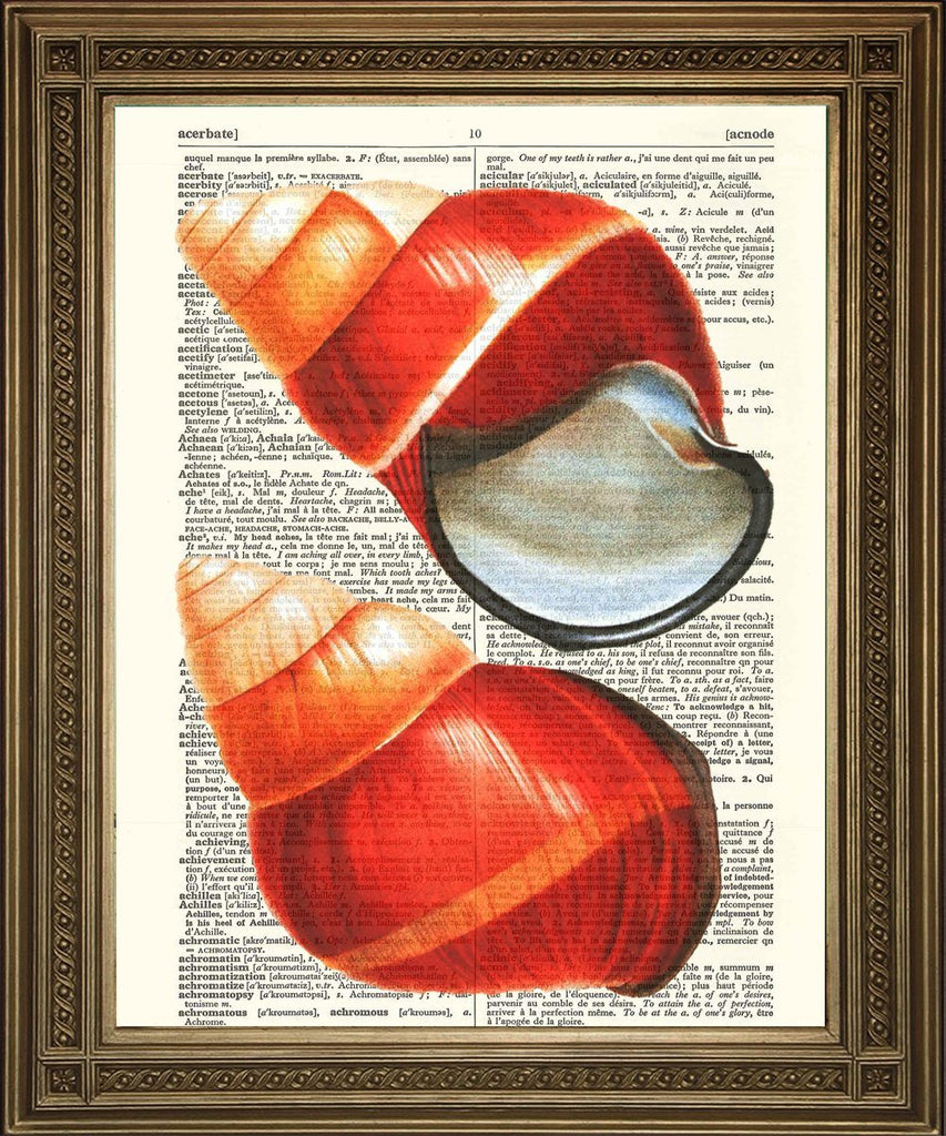 RED SEA SHELL: Vintage Dictionary Print Art - The Print Arcade