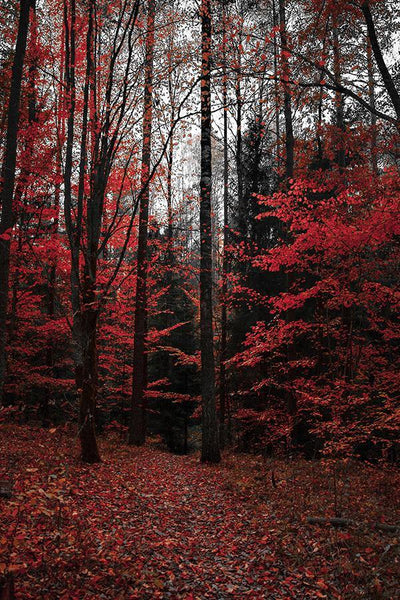 RED FOREST PRINT: Autumnal Trees Photo Art