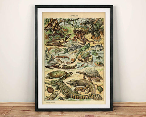 VINTAGE REPTILES POSTER: French Art Print With Crocodile, Snakes