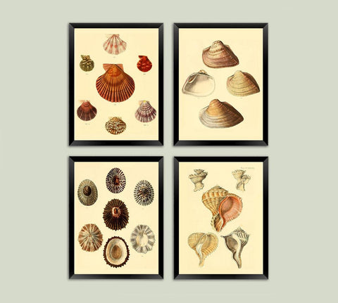 SHELL PRINTS: Vintage Home Decor Art Illustrations - The Print Arcade