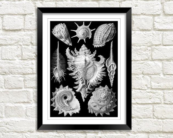 SEA SHELLS: Vintage Shell Art Print - The Print Arcade
