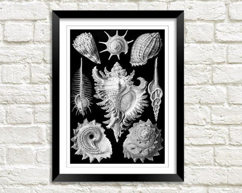SEA SHELLS: Vintage Shell Art Print