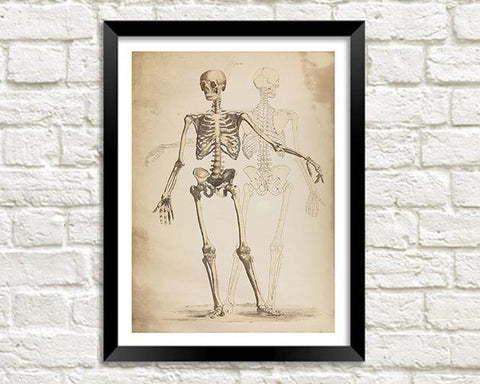 SKELETON PRINT: Vintage Anatomy Art Illustration
