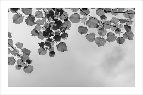 LEAVES AND SKY PRINT: Black and White Photo Art