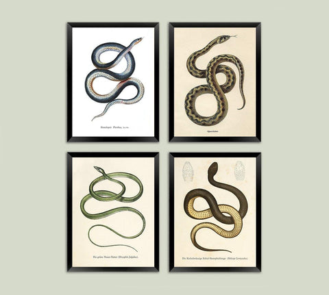 SNAKE PRINTS: Vintage Reptile Art Illustrations